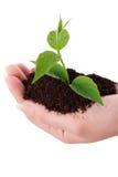 Remar la planta verde en una mano Fotografía de archivo