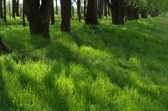 Remarkable green grass by the riverside. With trees in the backround Stock Image