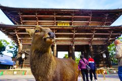The Innocent Deer at the gate of Todaiji Temple at Nara stock photo