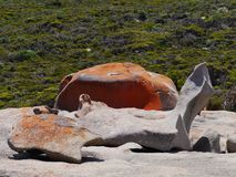 The remarkable rocks Stock Images