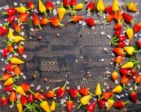 Remate abajo de la especia de la frontera de diferente se secan y de la pimienta del chile picante Foto de archivo libre de regalías