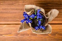 Remate abajo de las flores del iris en arpillera en fondo de madera Imágenes de archivo libres de regalías