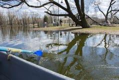 Reme na água, lagoa, árvores no parque Foto de Stock Royalty Free