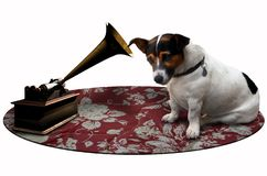 Dog listening to a voice stock image