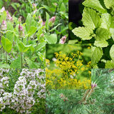 Remedial herbs Stock Image