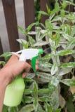 Remedio casero contra moho en las plantas imágenes de archivo libres de regalías