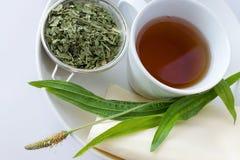 Remedio hecho en casa - lanceolata herbario del plantago del té del llantén - él imágenes de archivo libres de regalías