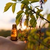Remedios naturales - aceite, herbario Foto de archivo