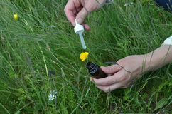 Remedy Bottle on Mountain Meadow Stock Photo