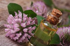 Remedy of clover in a bottle macro horizontal Stock Images
