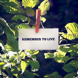 Remember to live inspirational message written on a card. Attached to a green leafy branch with a wooden clothes peg in sunlight with flare effect Stock Images