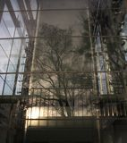 Remembering the trees. Tree reflecting in steel and glass structure of a modern building stock photography