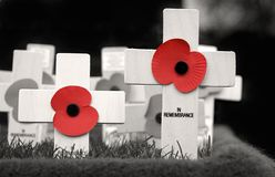 In Remembrance. Crosses placed in Remembrance of those who lost their lives during the war. Black and white with red poppies Stock Photos