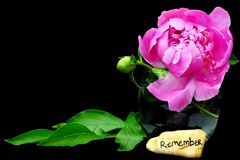 Remembrance. Stone with beautiful peony flower isolated on black with copyspace Royalty Free Stock Photography