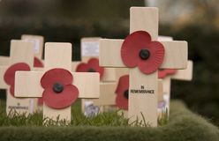 In Remembrance. Crosses placed in Remembrance of those who lost their lives during World War 1 Royalty Free Stock Photography