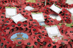 Remembrance poppies  Royalty Free Stock Photo
