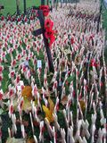 Remembrance Day 2 Royalty Free Stock Images