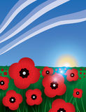 Remembrance Day background. A poppy field background the be used for Remembrance day Stock Photos
