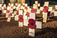 Remembrance Day Crosses Royalty Free Stock Image
