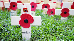 Remembrance day display in Westminster Abbey. Remembrance day display, wooden crosses with poppies, Westminster Abbey Stock Photography