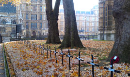 Remembrance day in London. Remembrance day celebration in London. Royal British Legion's Field of Remembrance opened at Westminster Abbey Royalty Free Stock Image