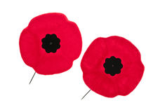 Remembrance Day poppies. Two red poppy lapel pins for Remembrance Day Stock Image