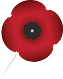 Remembrance Day Poppy. Stick Pin Royalty Free Stock Images