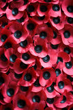 Remembrance Day: Poppy Appeal Stock Image