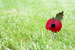 Remembrance Day Poppy in Grass Royalty Free Stock Photo