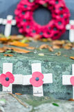 Remembrance Day Poppy Royalty Free Stock Image