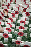 Remembrance Day: To All Who Have Fallen stock photos