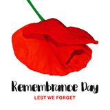 Remembrance Day vector card. Lest We forget. Realistic Red Poppy flower. International symbol of peace. Vector Illustration EPS 10 file royalty free illustration