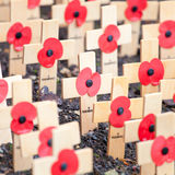 Remembrance poppies Royalty Free Stock Photography