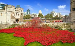 Remembrance poppies at Tower of London. Stock Photos