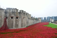 Remembrance poppies at tower of london Royalty Free Stock Photo