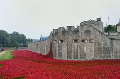 Remembrance poppies at tower Stock Photos