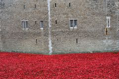 Remembrance poppies at tower of london wall Royalty Free Stock Image