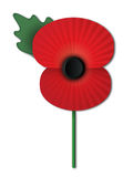 Remembrance Poppy. Remembrance Day poppy islated on white background Royalty Free Stock Photo