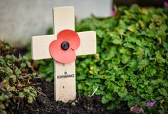 Remembrance Poppy on wooden cross. A remembrance poppy mounted on a wooden cross at the Military Cemetery, Cannock Chase, Staffordshire, England Royalty Free Stock Image