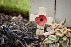 Remembrance Poppy on wooden cross. A remembrance poppy mounted on a wooden cross at the Military Cemetery, Cannock Chase, Staffordshire, England Royalty Free Stock Photography