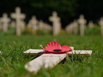 Remembrance poppy. World War I - Poppy on a remembrance cross lying on the grass in a graveyard royalty free stock photography