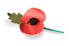 Remembrance Red Poppy. The British Legion organises a fund-raising drive each year in the weeks before Remembrance Sunday, during which artificial red poppies royalty free stock photo