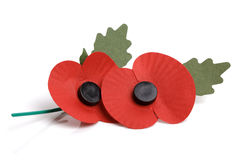 Remembrance sunday poppy Royalty Free Stock Image
