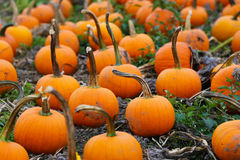 Remendo da abóbora em Sunny Autumn Day Imagens de Stock Royalty Free
