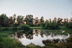 Remendo inundado da terra poça Inundação da mola do rio Fotografia de Stock