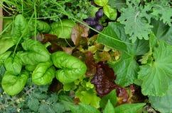 Remendo vegetal Fotografia de Stock