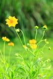 Remercie les fleurs et les bourgeons de la fleur Image stock