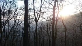 Remete-rét en hiver Photos libres de droits