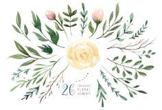Remettez à aquarelle d'isolement par dessin l'or vert illustration florale avec des feuilles, des branches et des fleurs aquarell Photo libre de droits
