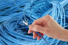 Remettez à fixation le câble bleu de réseau Photo stock